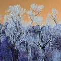 Blue Trees New Mexico by Dori Basilius