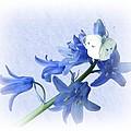 Bluebells And Butterflies by Sharon Lisa Clarke