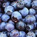 Blueberries by Carol Groenen