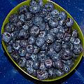Blueberries by Denise Keegan Frawley