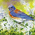 Bluebird by John Pirnak