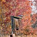 Bluebird by Art Dingo