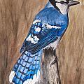 Bluejay by Angela Johnson