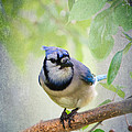 Bluejay In A Tree by Betty LaRue