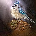 Bluejay In Spotlight by Randall Branham