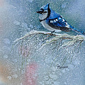 Bluejay In Winter by Claire  Abrams