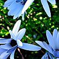 Bluey Twinkles by HweeYen Ong