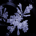 Bluish Gleaming Radiant by Rick Bragan
