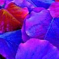 Bluish Purple And Pink Leaves by Sheila Kay McIntyre