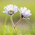Blumen Liebe by Tanja Riedel