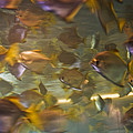 Blurred Image Of Fish Swimming In An by Todd Gipstein