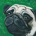Bo The Pug by Ania M Milo