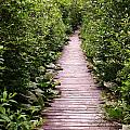 Boardwalk Swamp by Jeff Heimlich