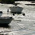boats at low tide in Cape Cod by Matt Suess