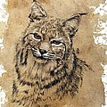 Bobcat by Debra Jones