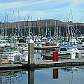 Bodega Bay Harbor by Kelly Manning