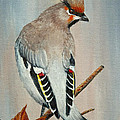 Bohemian Waxwing Study  by Dee Carpenter