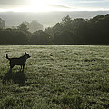 Bolinas, California, United States Dog by Keenpress