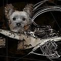 Bone-a-fide-ride by Shania Calvert