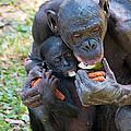 Bonobo 3 by Kenneth Albin