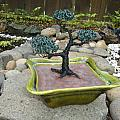 Bonsai Tree Green Medium by Scott Faucett