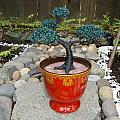 Bonsai Tree Medium Red Glass Vase Planter by Scott Faucett