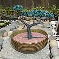 Bonsai Tree Round Brown Planter by Scott Faucett