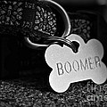 Boomer's by Susan Herber