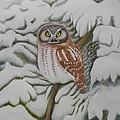 Boreal Owl by Alan Suliber