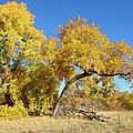 Bosque Beauty by Jon William Lopez