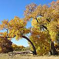 Bosque Fall by Jon William Lopez