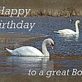 Boss Birthday Card - Mute Swans On Winter Pond by Mother Nature
