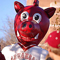 Boss Hog by Amy Glover Bryant