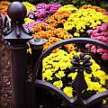 Boston Flowers by Mark Valentine