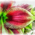 Botanical 01 by Dawn Serkin