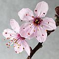 Botanical II by David Vockeroth