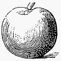 Botany: Apple by Granger