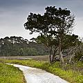 Botany Bay Pathway Tree by Donni Mac