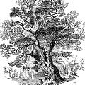 Botany: Oak Tree by Granger