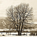 Boulder County by Marilyn Hunt