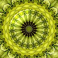 Bouquet Of Roses Kaleidoscope 11 by Rose Santuci-Sofranko