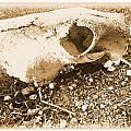 Bovine Skull by Tammy Herrin