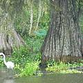 Bow Legged Egret by Larry Eddy