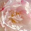 Bowl Of Petals by Cathy Sosnowski