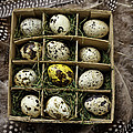 Box Of Quail Eggs by Garry Gay