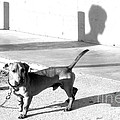 Boy Meets Dog by Joe Jake Pratt