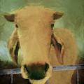 Brahma Cow Greeting by Ann Powell