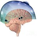 Brain In Skateboard Helmet by Ted Kinsman