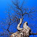Branches In The Sky by Judge Howell