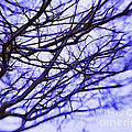 Branches In Winter by Judi Bagwell